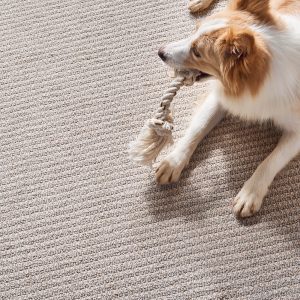 Pet friendly Carpet Greensboro, NC | Carpets by Direct