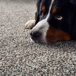 Pet friendly floor | Carpets by Direct