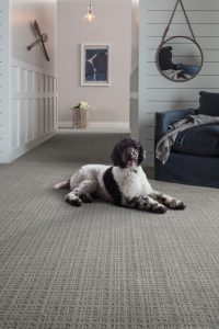 Dog on Carpet | Carpets by Direct