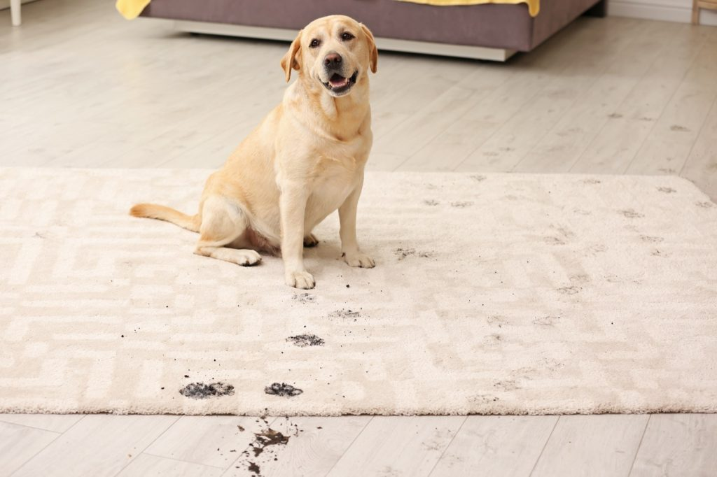 Best Rug Materials in a Home with Pets | Carpets by Direct